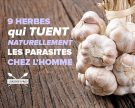 9 herbes qui tuent naturellement les parasites