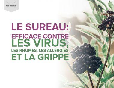 Le sureau : efficace contre les virus, les rhumes, les allergies et la grippe
